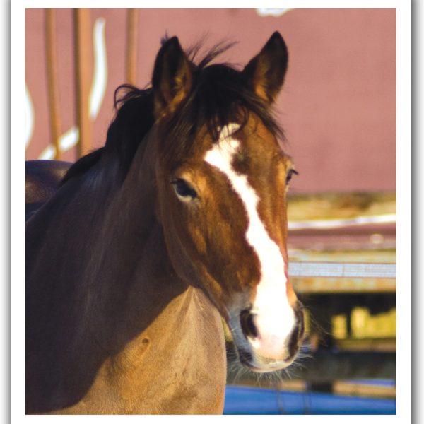 Horses For Loan ~ Do I need legal advice?