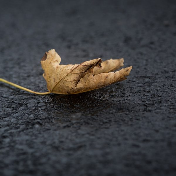 Road Traffic Accidents in Autumn